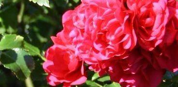 Gartentätigkeiten KW 27